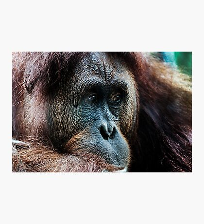 Primate thoughts Photographic Print