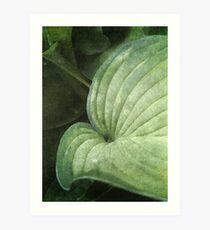 Blue Green Hosta Leaf Art Print