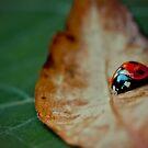 Lady on a leaf by Mark  Bennett