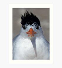 Mascara: How much is too much? Royal Tern Art Print