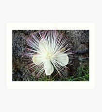 Spiny flower Art Print