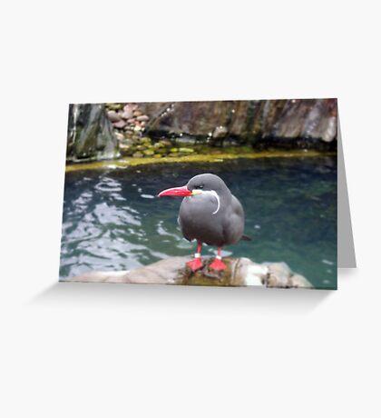 Inca Tern Greeting Card