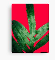 Green Fern on Red Pink Canvas Print