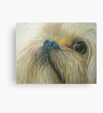 Cheeky chappy Canvas Print