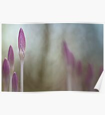 Adorable Crocuses.... Poster