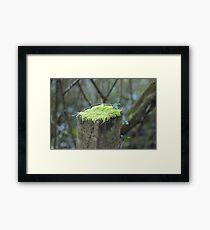 Mossy cap Framed Print