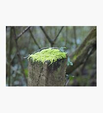 Mossy cap Photographic Print