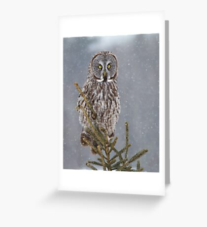 Pine Top - Great Grey Owl Greeting Card