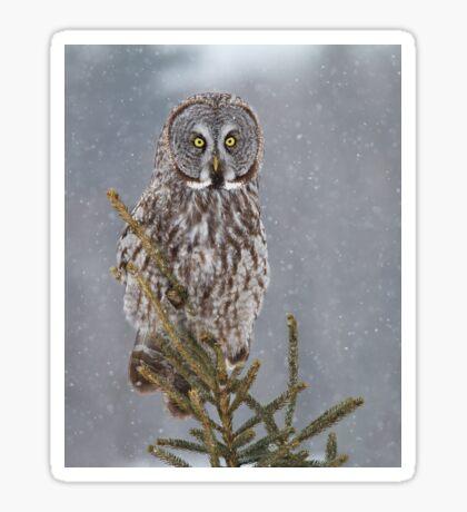 Pine Top - Great Grey Owl Sticker