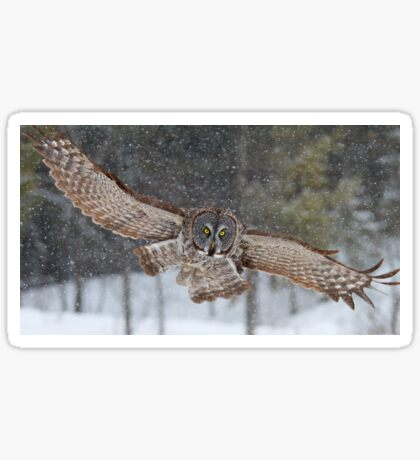 Duck! - Great Grey Owl Sticker