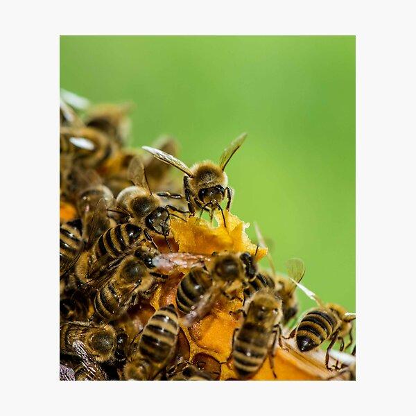 Honeycomb for Breakfast Photographic Print