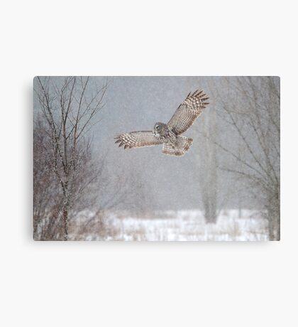Towards the Heavens - Great Grey Owl Canvas Print