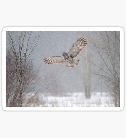 Towards the Heavens - Great Grey Owl Sticker