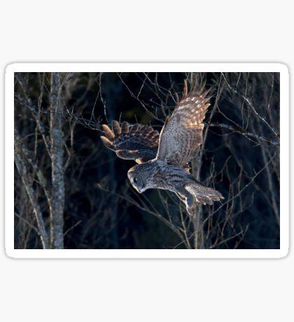 Great Grey Owl Sticker