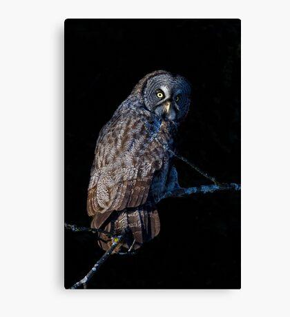 Spotlit - Great Grey Owl Canvas Print