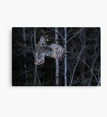 Hover - Great Grey Owl Canvas Print