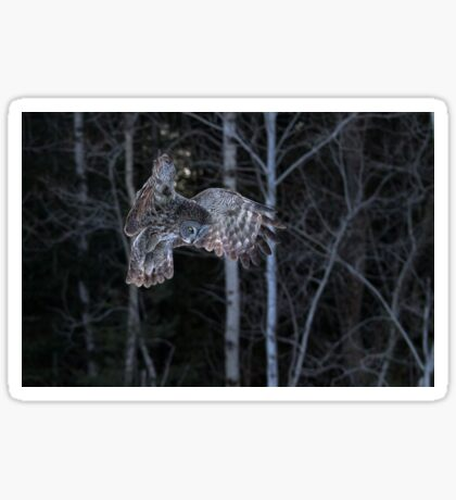 Hover - Great Grey Owl Sticker