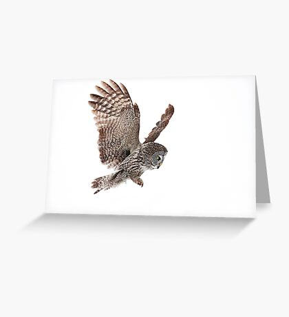 Incoming - Great Grey Owl Greeting Card