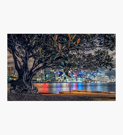 Balmain Tree Photographic Print