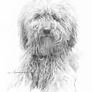 Dog good-hair-day drawing by Mike Theuer