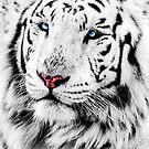 White Tiger Portrait von MMPhotographyUK