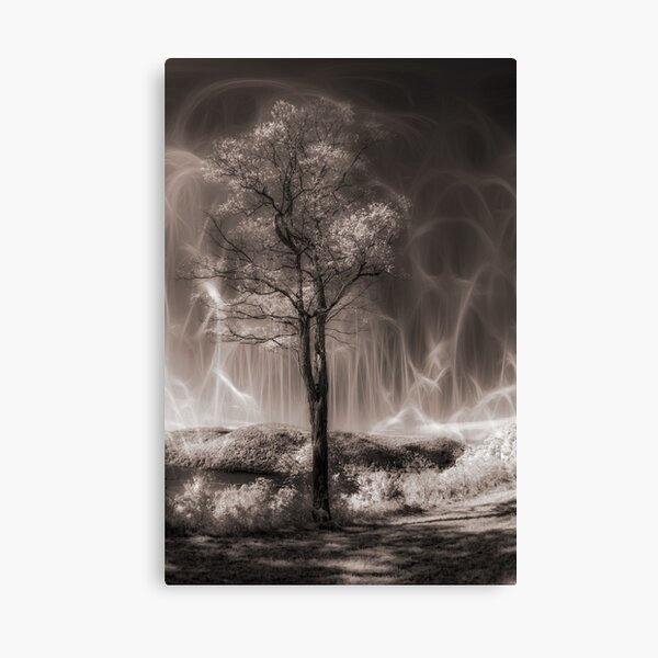 Mystery of the Tree Canvas Print
