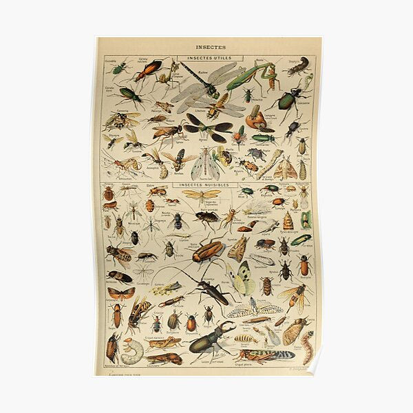 Adolphe Millot Insectes Poster