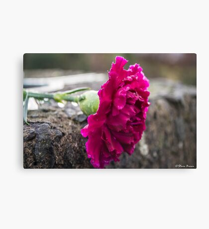 Pink - Coloured Canvas Print