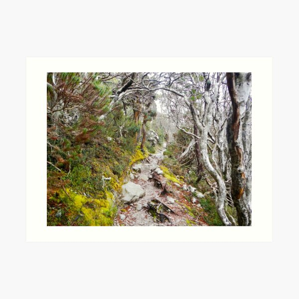 Winter Walk, Wilsons Promontory Art Print