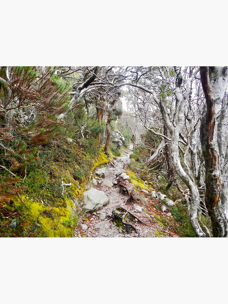 Winter Walk, Wilsons Promontory by ajdesignsau