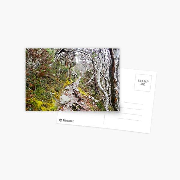 Winter Walk, Wilsons Promontory Postcard
