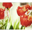 Tulips with grungy effects and border by Marlene Hielema