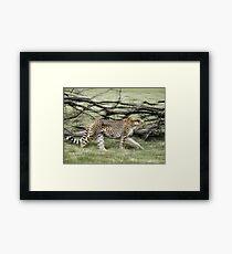 unique moving cheetah photograph Framed Print