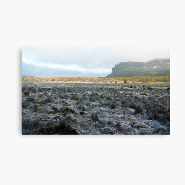 Morning Frost, Mt Oakleigh, The Overland Track Canvas Print