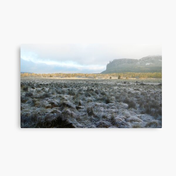 Morning Frost, Mt Oakleigh, The Overland Track Metal Print