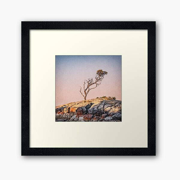 Binalong bay tree Framed Art Print