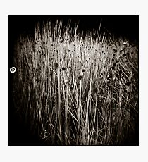 { reeds } Photographic Print