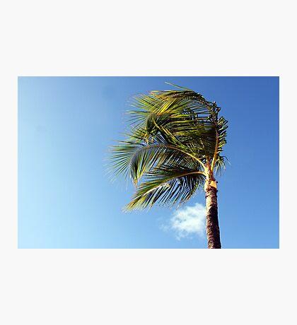 Warm Breeze Photographic Print