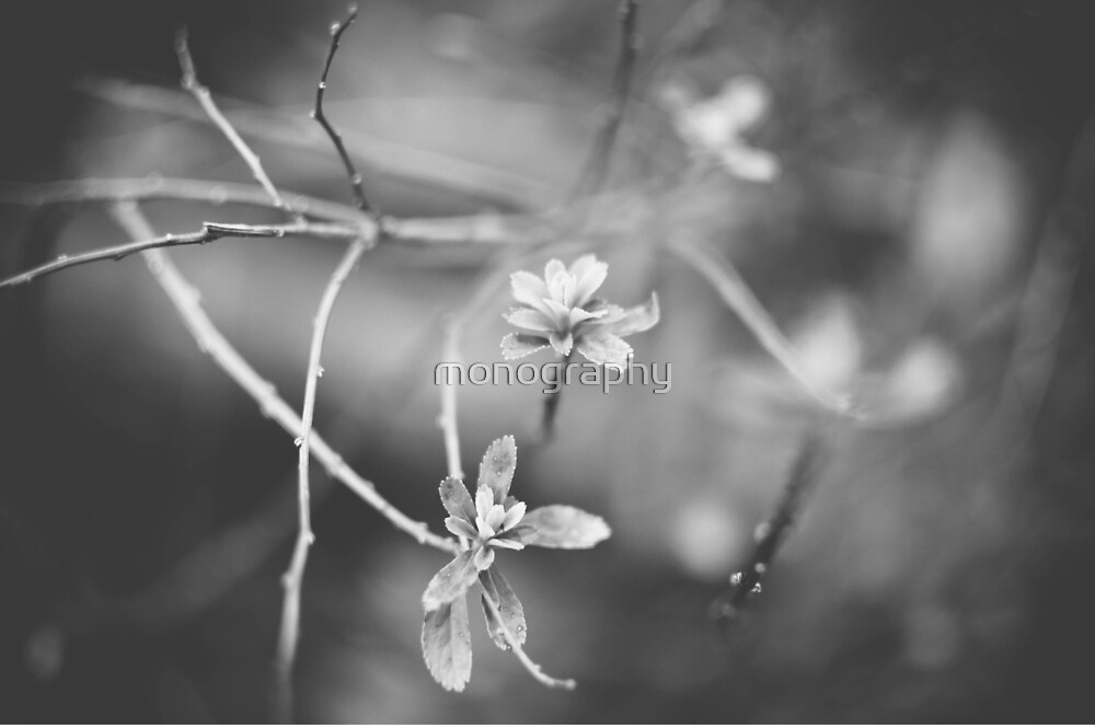 Blossom Out Loud! by monography