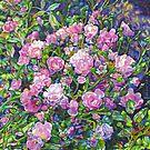 Wild Roses by Morgan Ralston