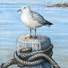 Sea Gull  by owen  pointon
