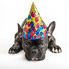 Party Dogs by Dobromir Dobrinov