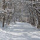 Winter Trees  by Dobromir Dobrinov