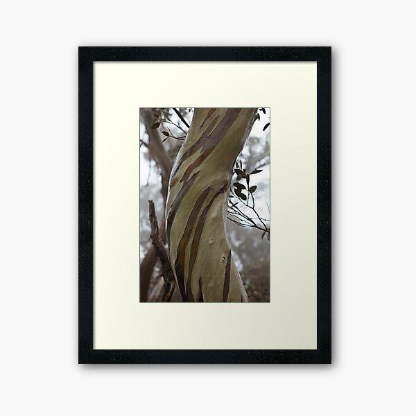 Charlotte Pass - Snow gums view03 Framed Art Print