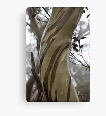 Charlotte Pass - Snow gums view03 Canvas Print