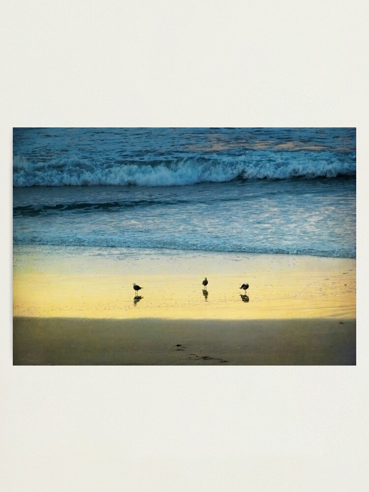 Alternate view of The Early Birds Photographic Print