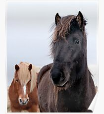 Iceland horses Poster