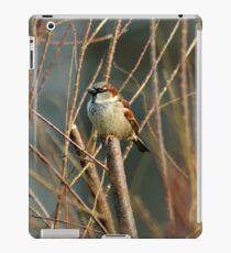 Perching Sparrow iPad Case/Skin
