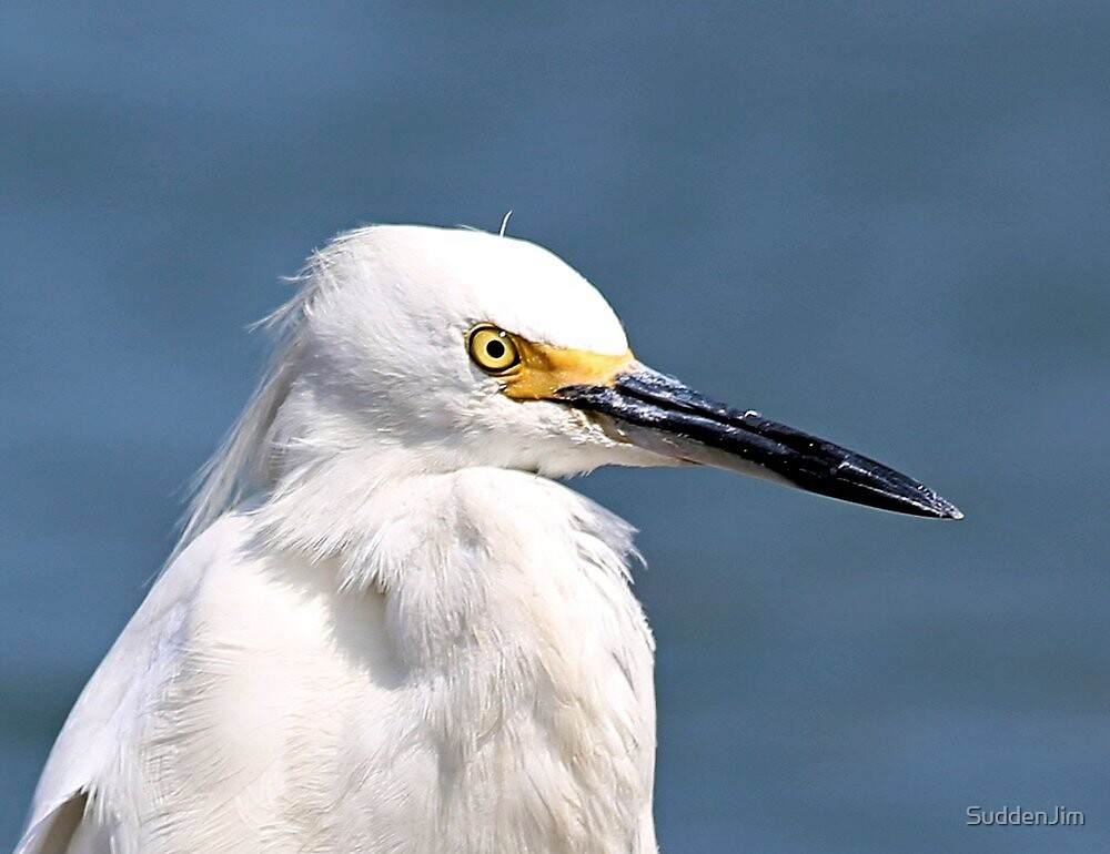 Egret by SuddenJim