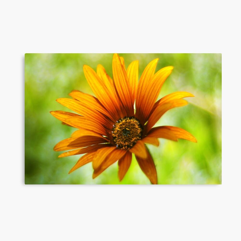 Flor de verano Canvas Print